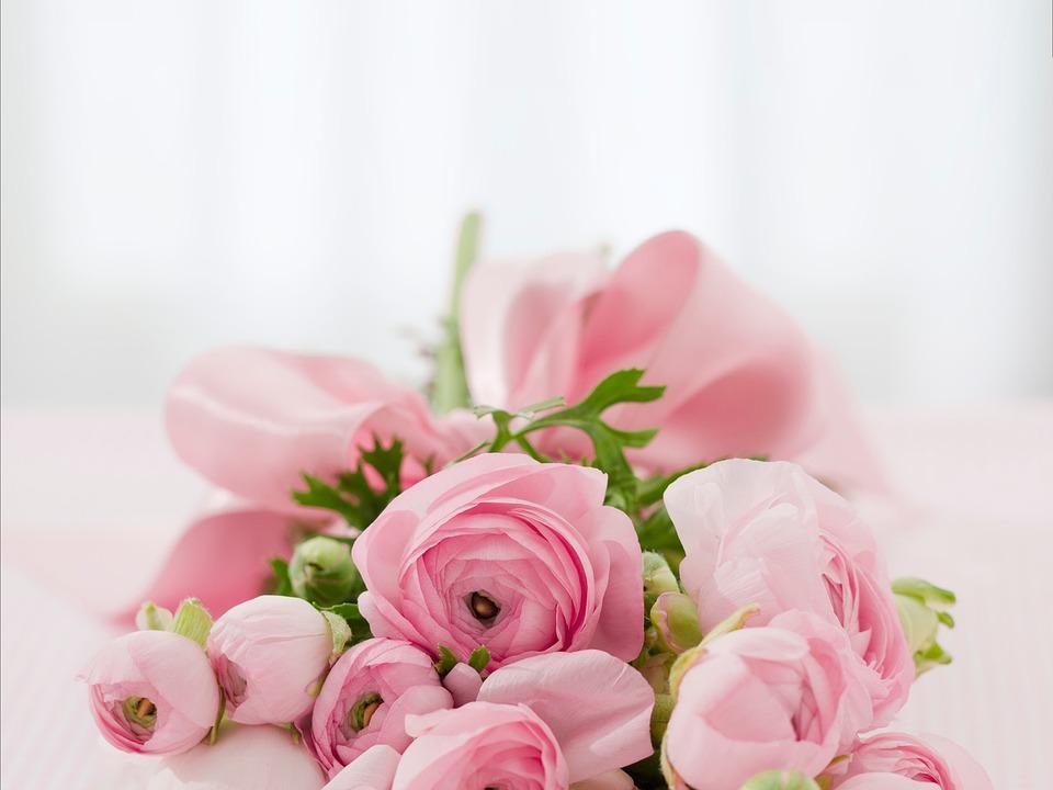 Przepros Kwiatami Jakie Kwiaty Podarowac Na Przeprosiny Krawatek Pl
